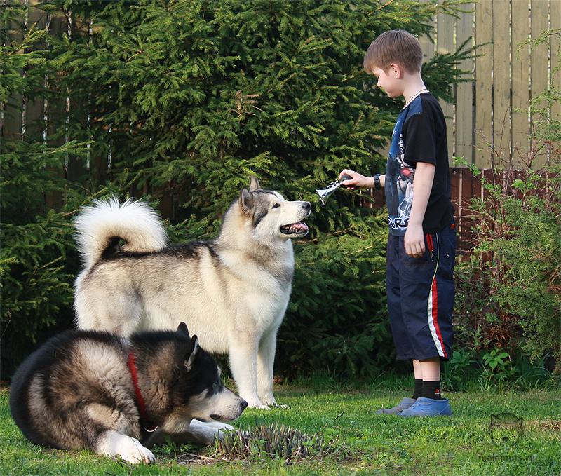 Общение с домашними животными